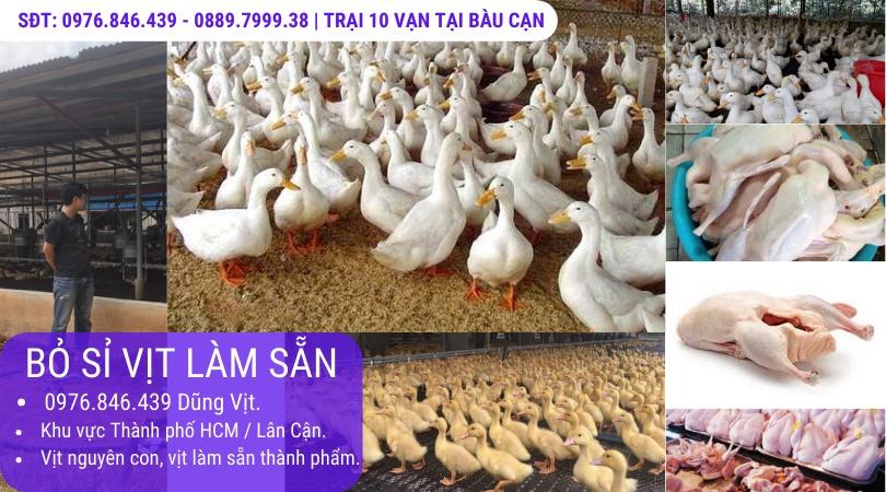 Trại Vịt 10 vạn con Đồng Nai, cung cấp sỉ vịt làm sẵn TPHCM.